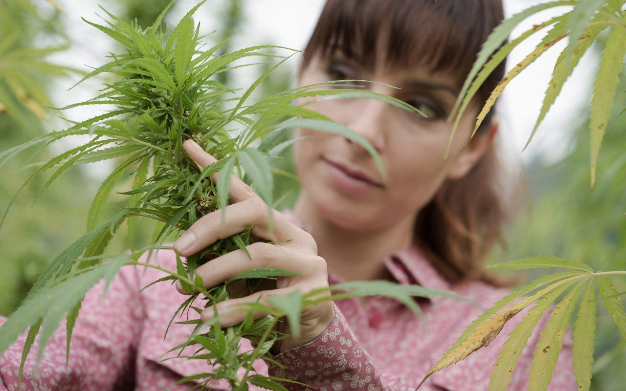 The+Ace+Class+Cannabis+Beauty.jpg