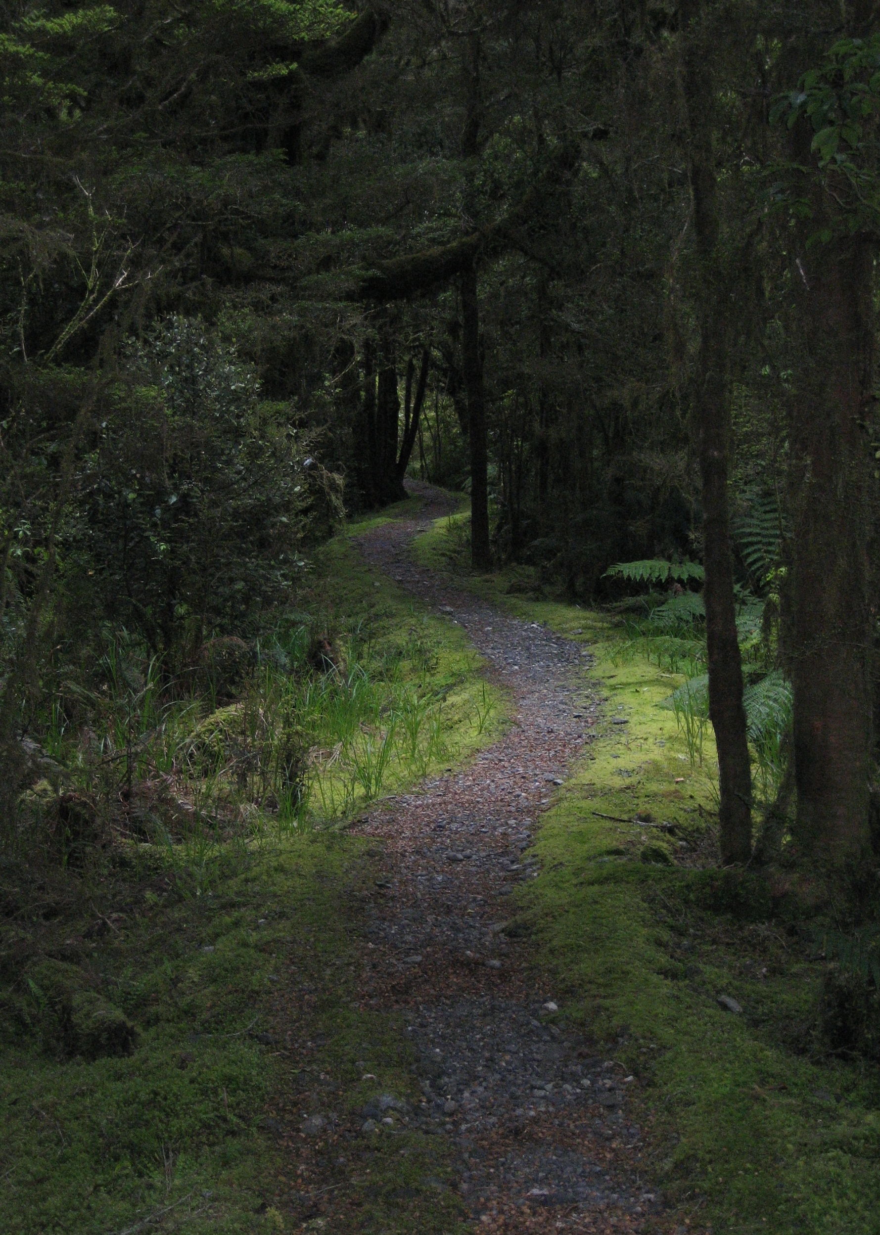 And see this path? This is what writing often feels like to me. A curvy trail through thick woods. Uncertainty at every step. And yet, you keep moving forward.