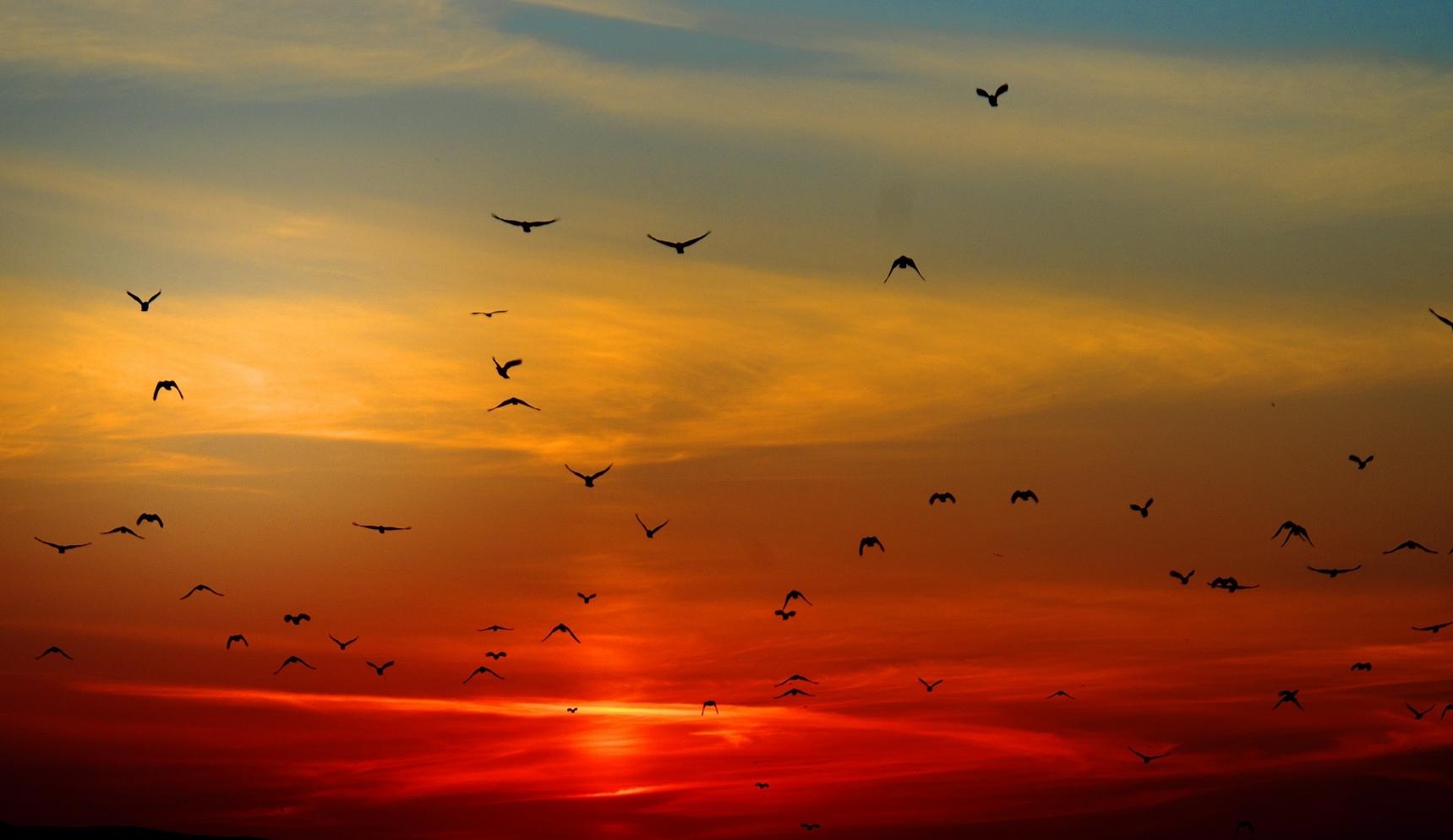 sunset-100367_1920.jpg