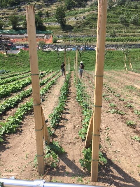 The Don Guanella farm.
