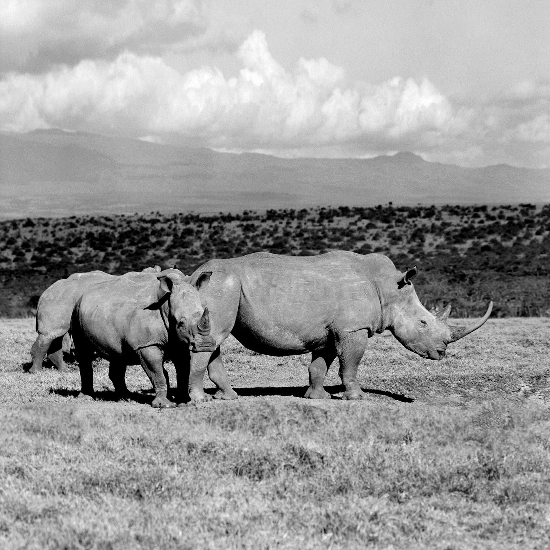 Rhinos_Kenya-AVR0067M-049-11.jpg