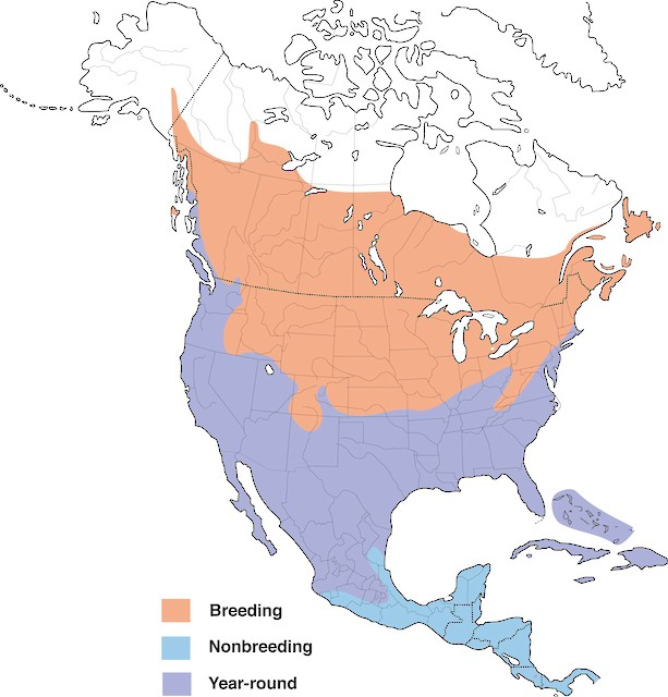 Distribution of the Killdeer (courtesy of Cornell Lab of Ornithology).
