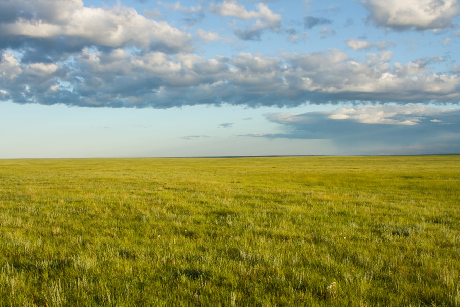 Valley County native prairie                             (John Carlson photo)