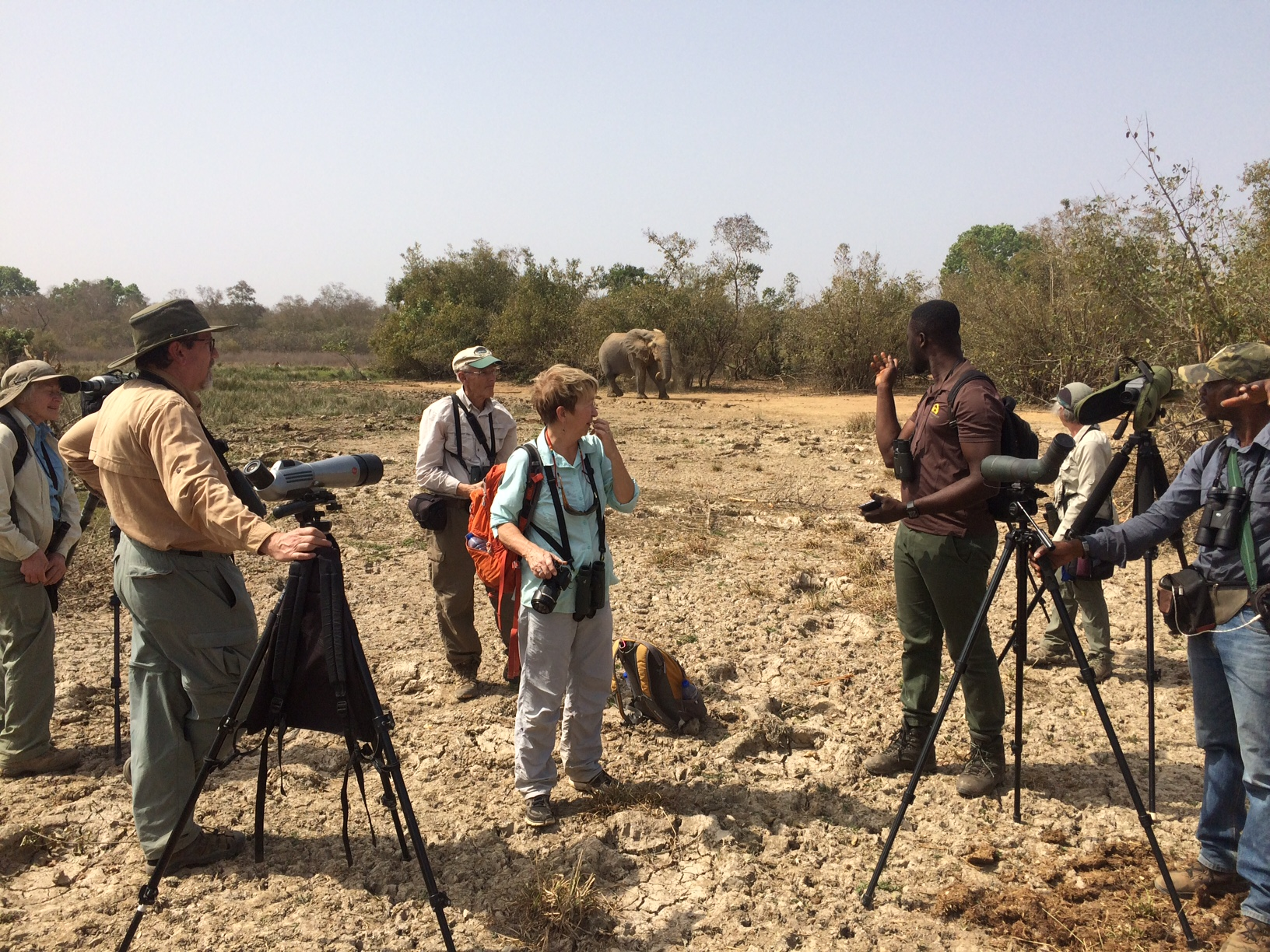 Birding with elephant, Mole National Park, January 2018 (Jeff Marks photo)