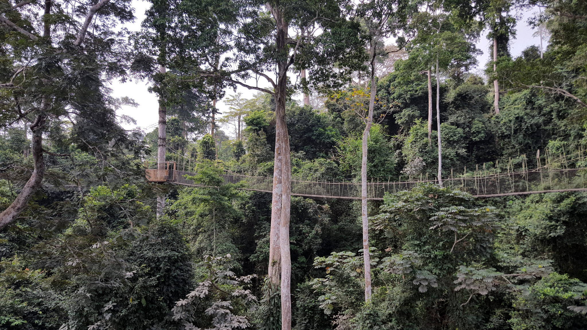 Canopy walkway at Kakum National Park, January 2018 (Dan Casey photo)
