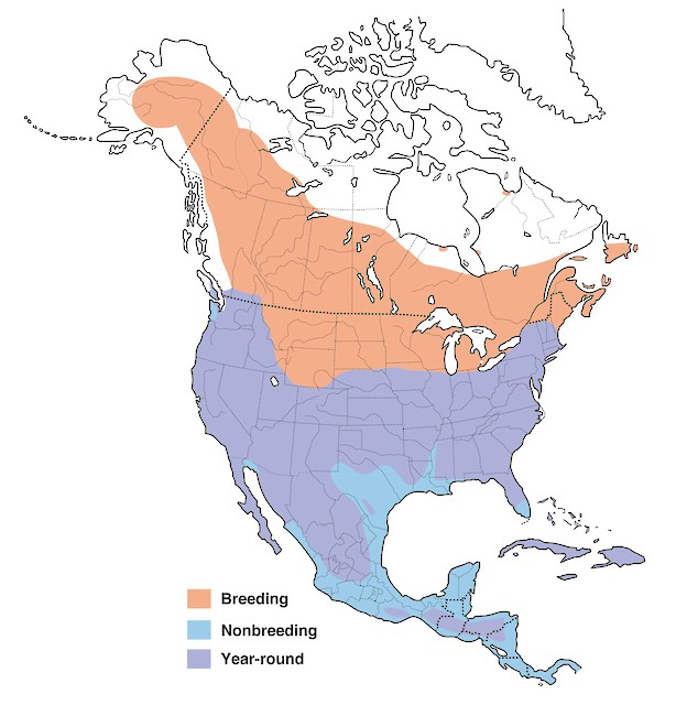 North American distribution of the American Kestrel (courtesy of Cornell Lab of Ornithology)