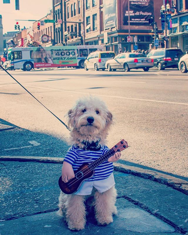 Hey, y'all! @thenashvilledood taking it down to Broadway to sing the song of his people 🐶🎤😉 #nashville #mondaymemories . . . . . #goldendoodlesofinstagram #nashvilletn #goldendoodlesofinsta #broadway #musiccity #fifthandbroadway #TODAYfanphoto #dailybarker #fifthandb #dogfriendly #goldendoodlemoments #worldofcutepets #topdogphoto #clubdoodle #doodleselfie #dailypuppy #doodletales #ilovemydog #mydogiscutest #doodlesofinstagram #doglife #doodlefeatures #dogsofnashville #theglobaldog #doodlesoftheworld #thenashvilledood #pupdoggo5 @thedodo