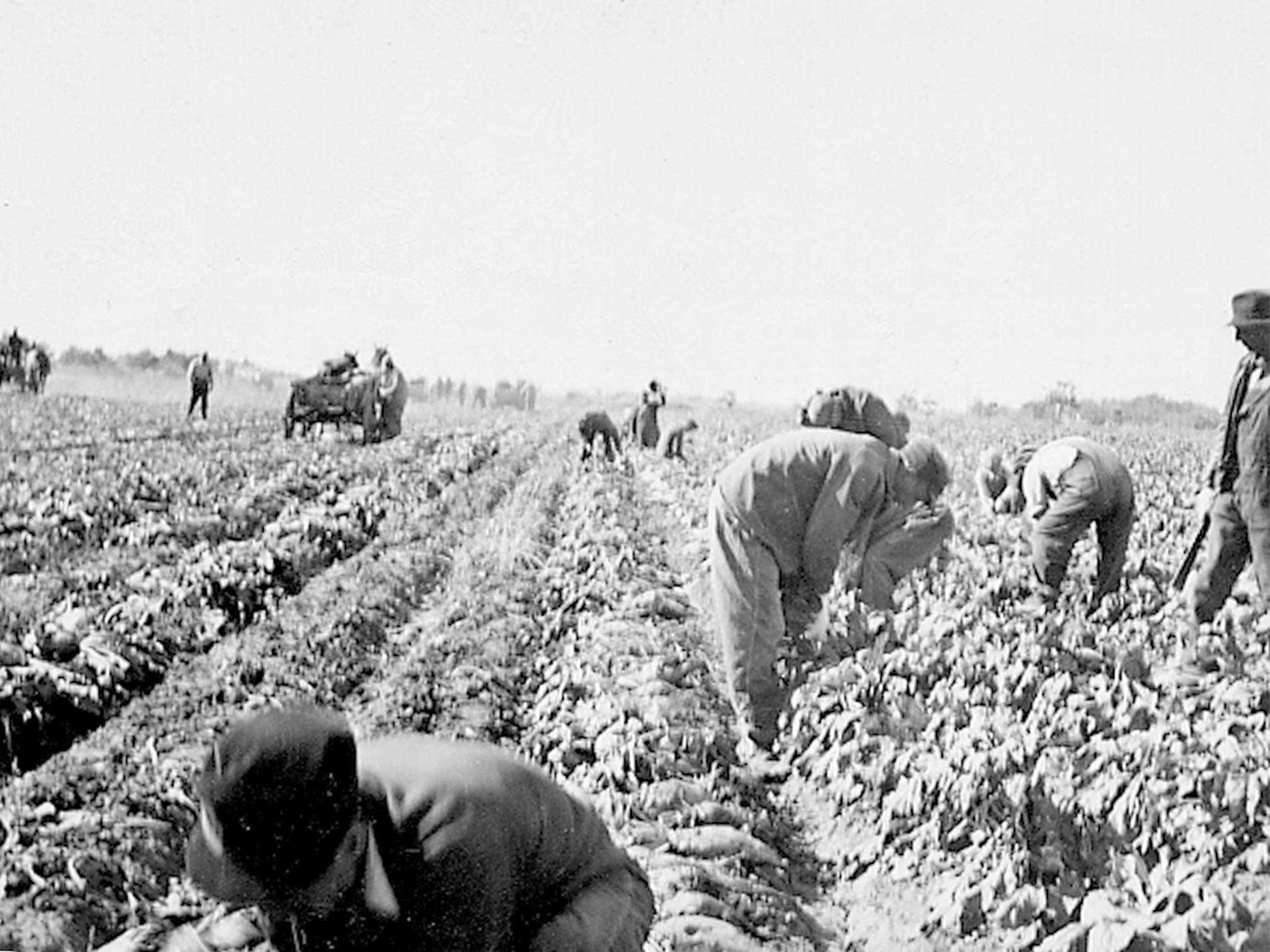 FARM1940.JPG