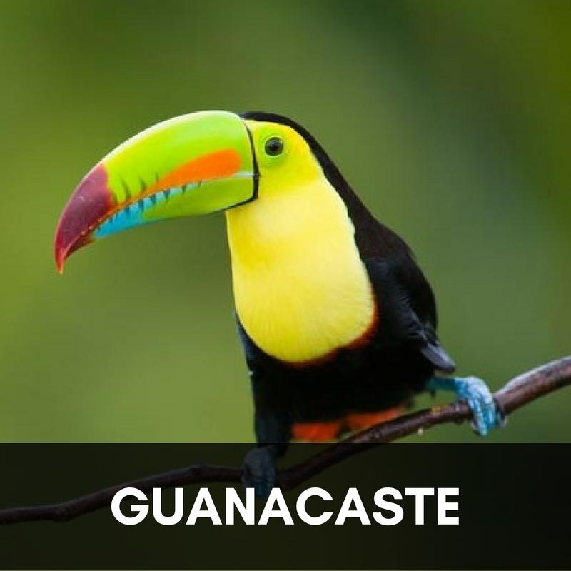 Guanacaste.jpg