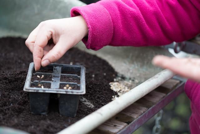 seed sowing.jpg