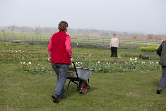 Claire with Wheelbarrow.jpg