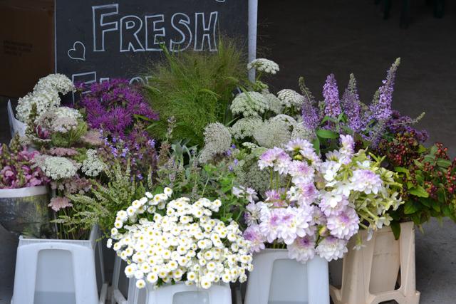 Hydrangea, Monarda, Antirrhiunm, Feverfew, White flowering mint, Evelyn Dahlias, Nicotiana, Daucus Dara, Panicum, Ammi, Buddleya and Hypericum