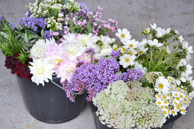 Buckets of flowers including Daucus, Feverfew, Cosmos, Verbena bonariensis, Dahlias, Statice and Cynoglossum - plus some scented chocolate cosmos, maybe not on theme, but i couldn't resist!