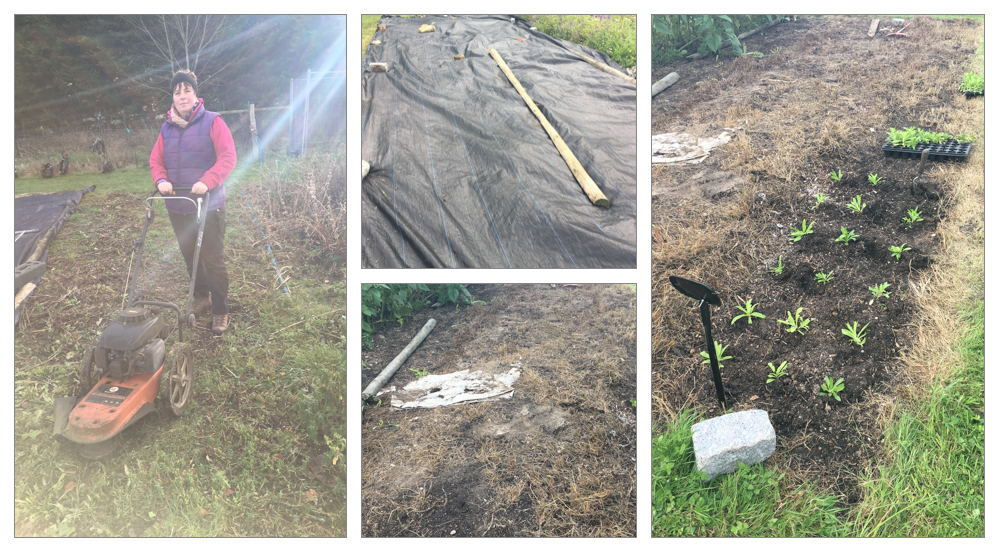 Mulched beds montage.jpg