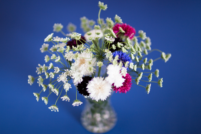 Simple ammi and cornflowers arrangement.jpg