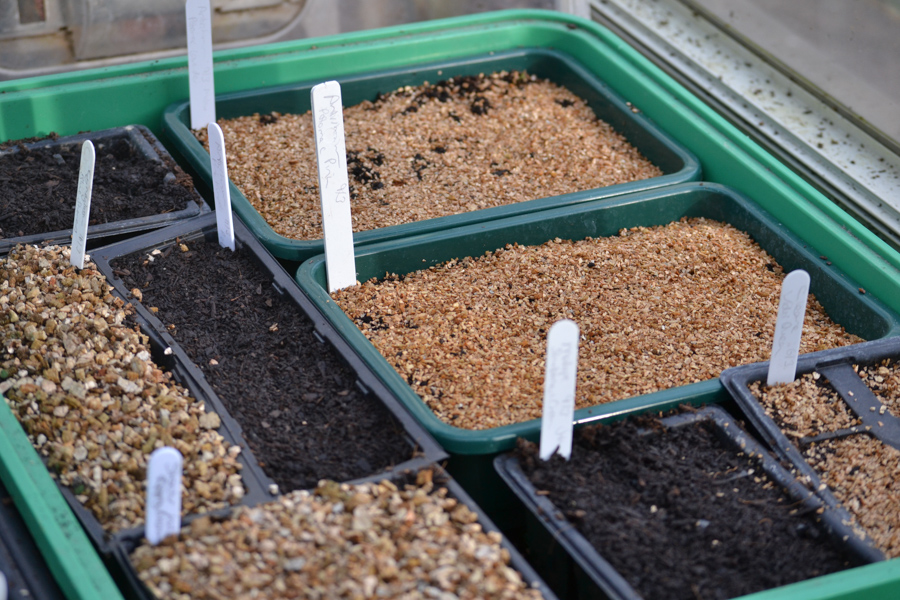 half and quarter seed trays with vermiculite.jpg