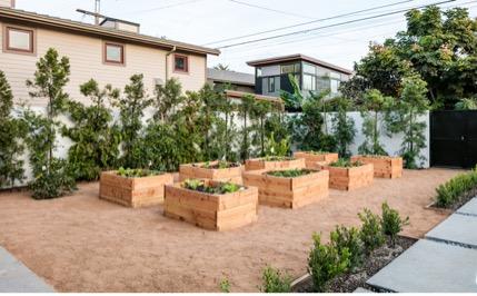 organic garden2.jpg