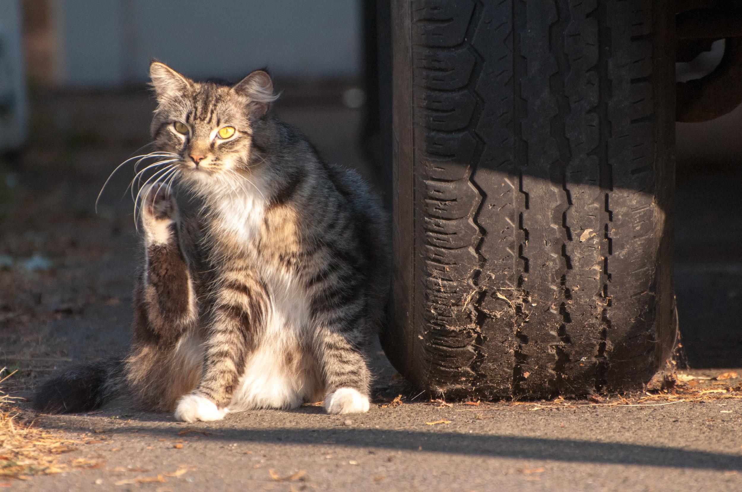 Hayden Island Cat Count 10.jpg