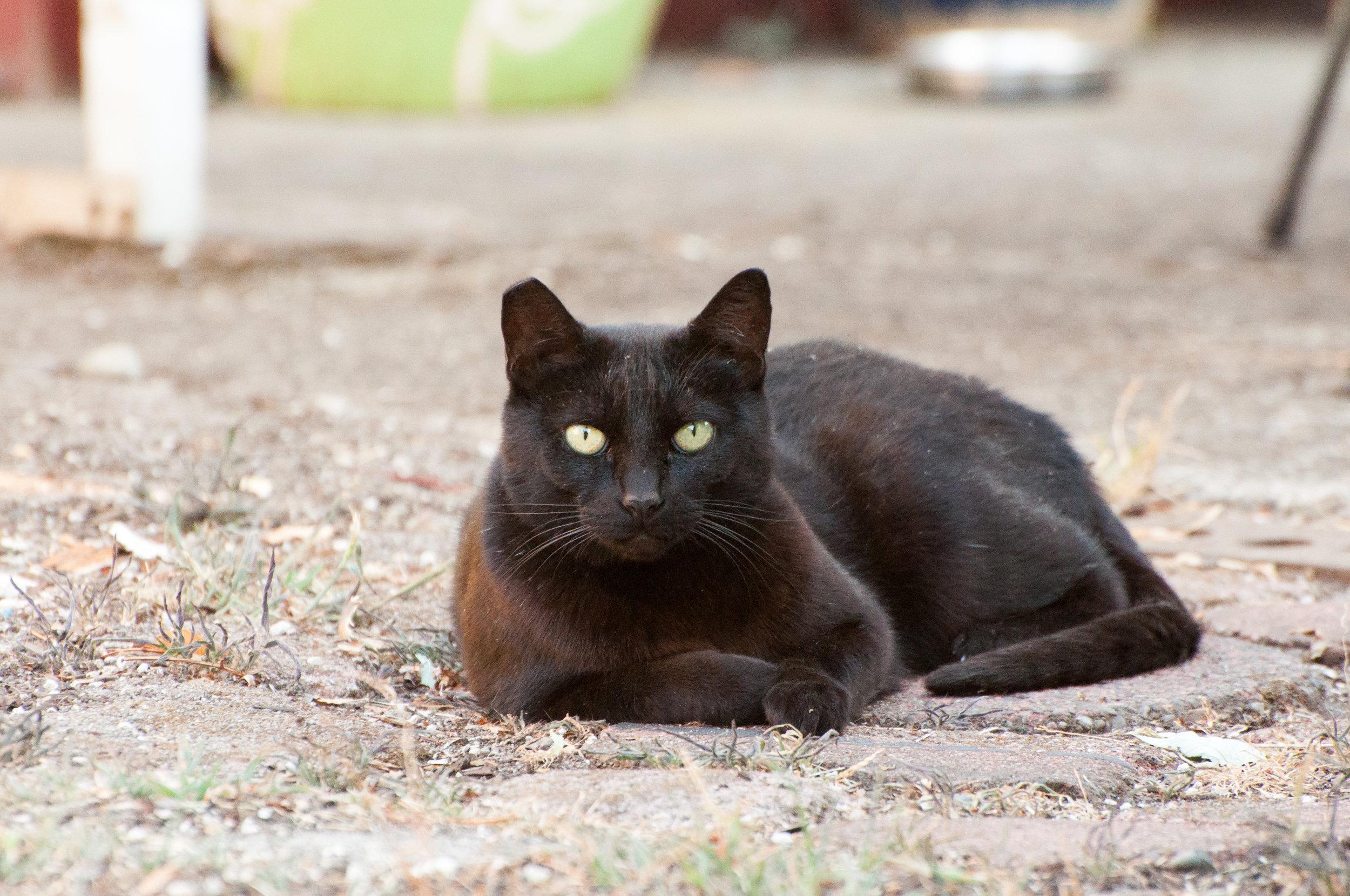 Hayden Island Cat Count 16.jpg