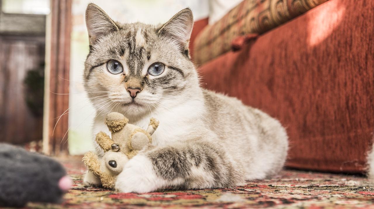 cat with teddy on floor inside.jpg