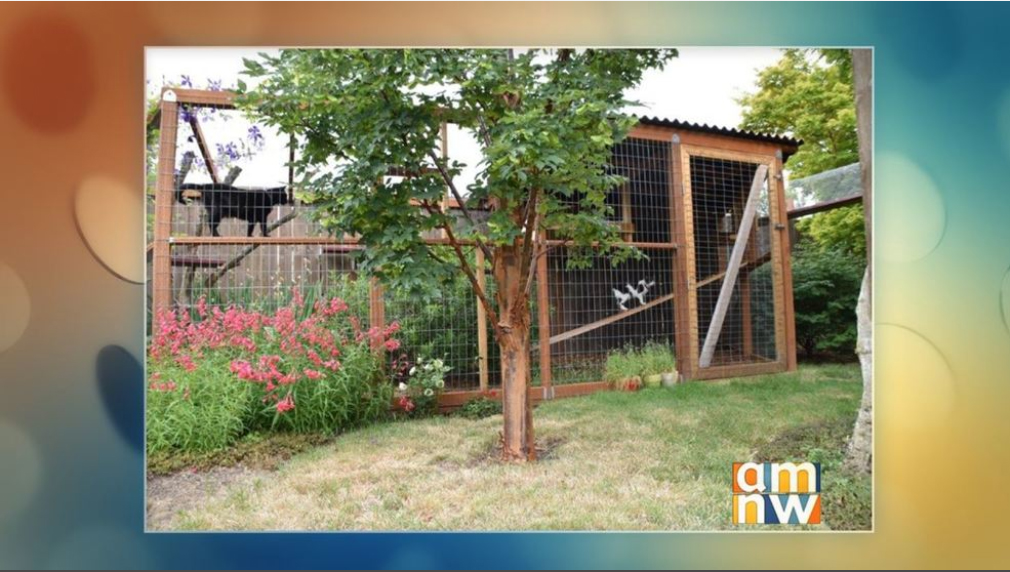 Watch an interview with Karen Kraus (FCCO) and Bob Sallinger (Portland Audubon) on    KATU's AM Northwest