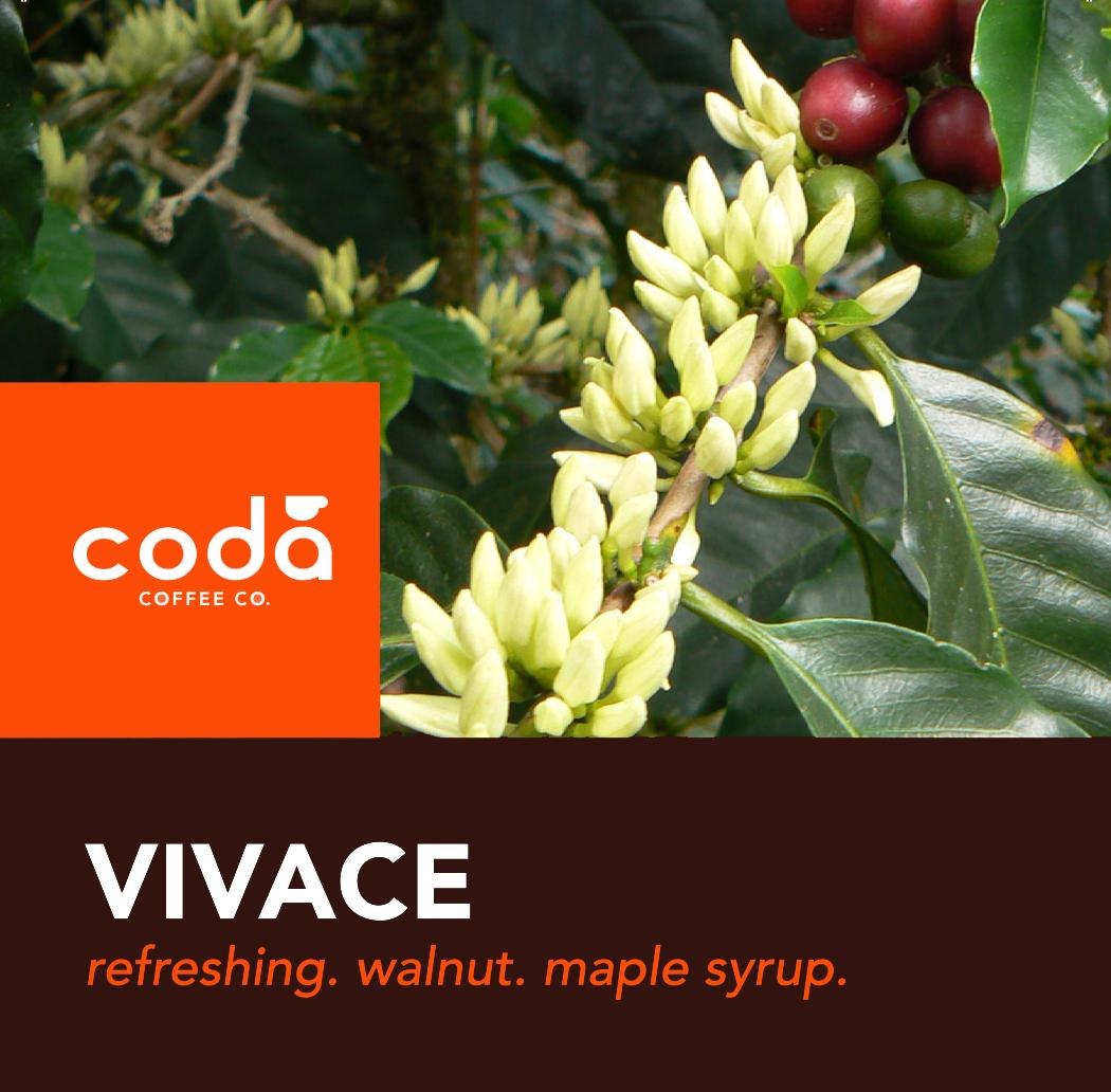 Coda Coffee Company Vivace Coffee Blend