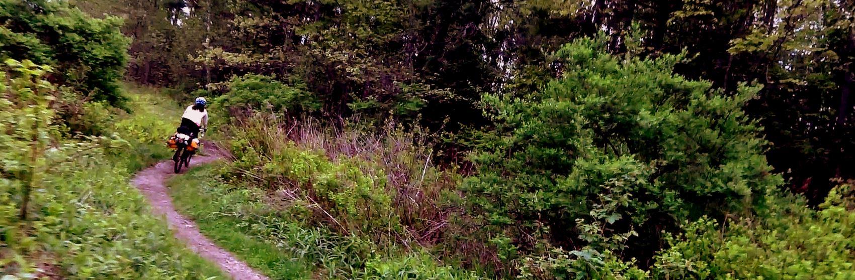 Into-the-woods-bikepacking-video-image-Rob-Vandermark.jpg