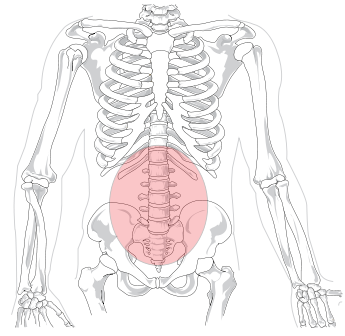 Figure 1. Your lower back. (Drawing by LadyofHats)