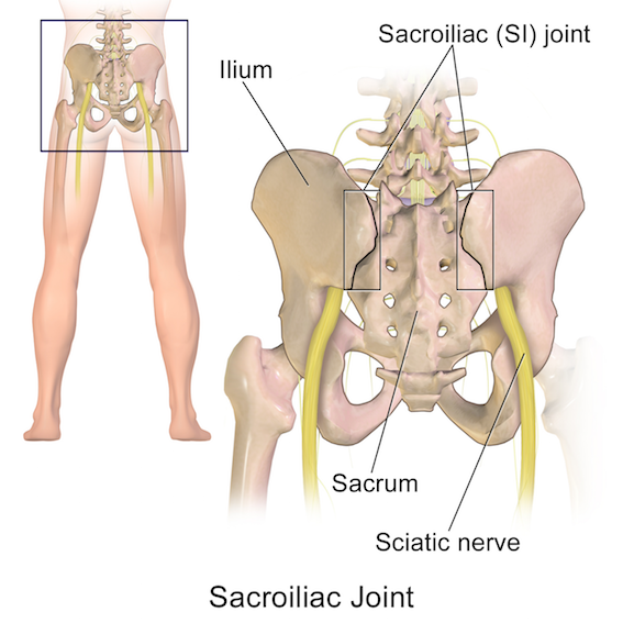 Figure 4. Sacroiliac joint and sciatic nerve. (Drawing by BruceBlaus under Creative Commons Attribution 3.0 Unported)
