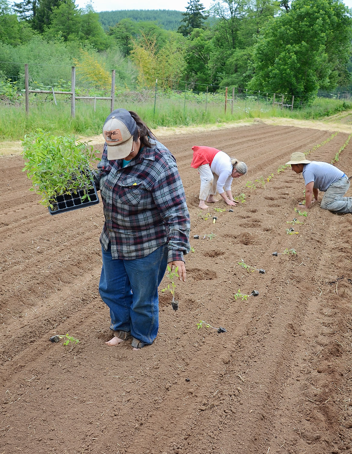 Planting-Tomatoes-(by-hand)-(10).jpg