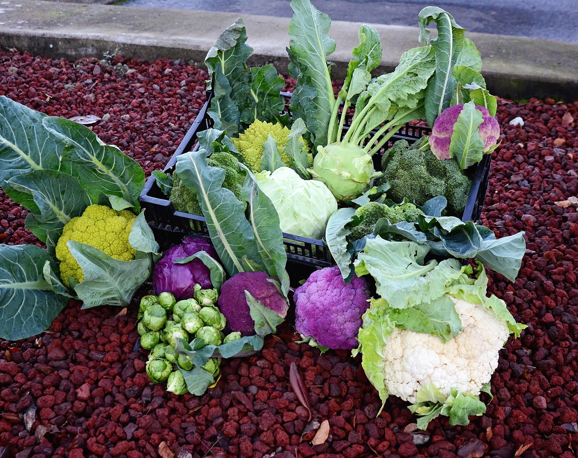 Veggies harvested: 12-29-14