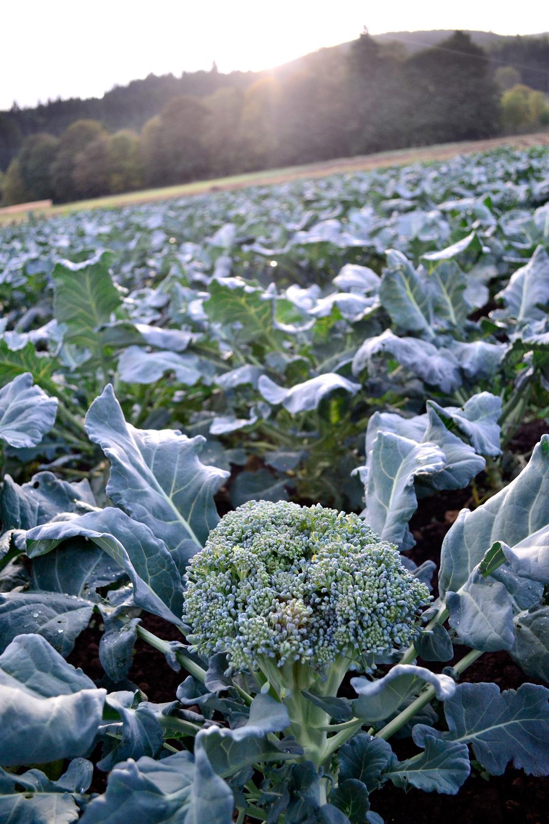 Broccoli: October 2014