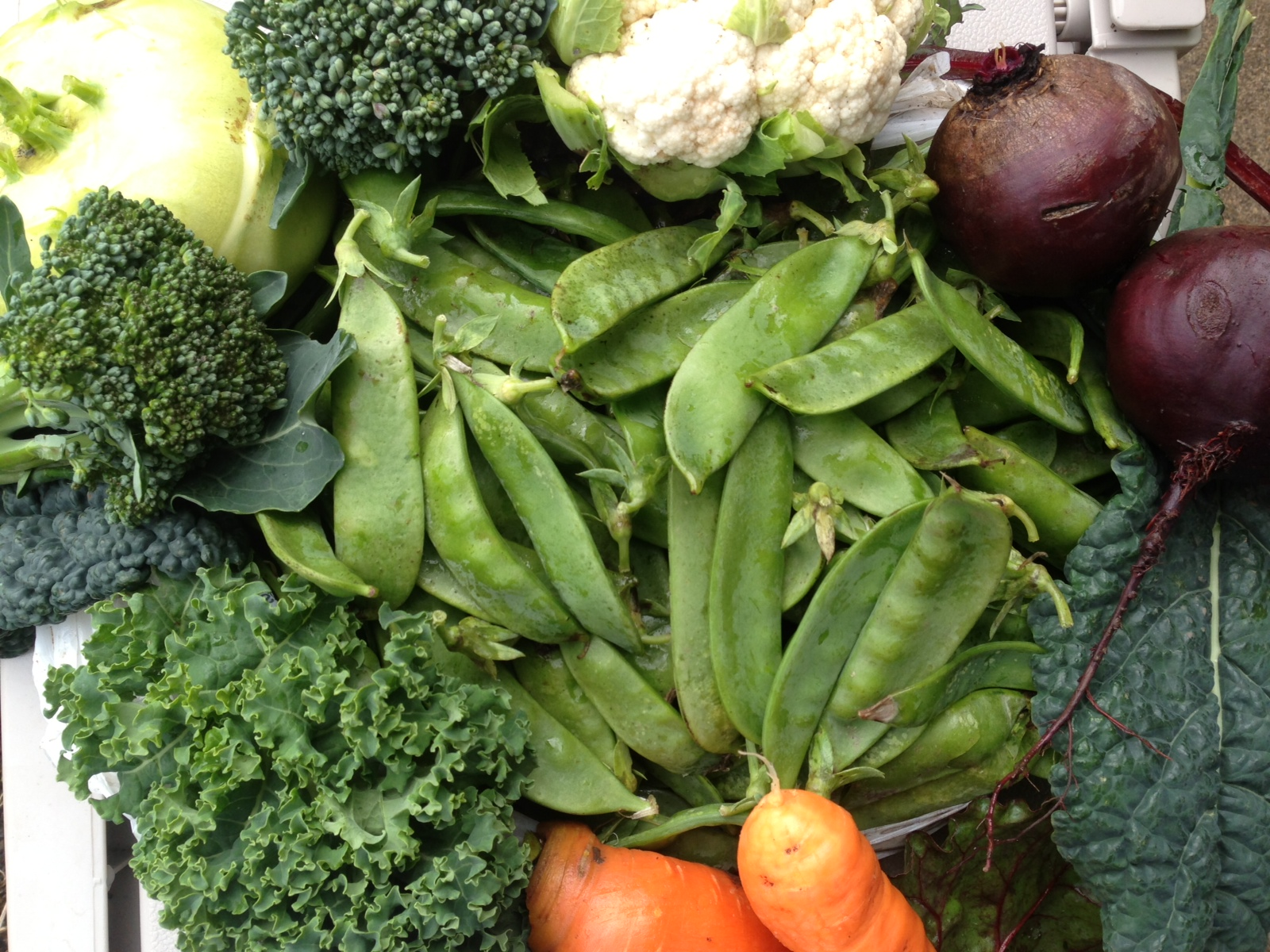 Veggies planted in the summer and fall, then harvested just in time for Thanksgiving.