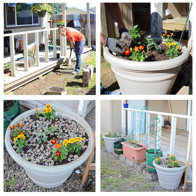 Mel's first garden