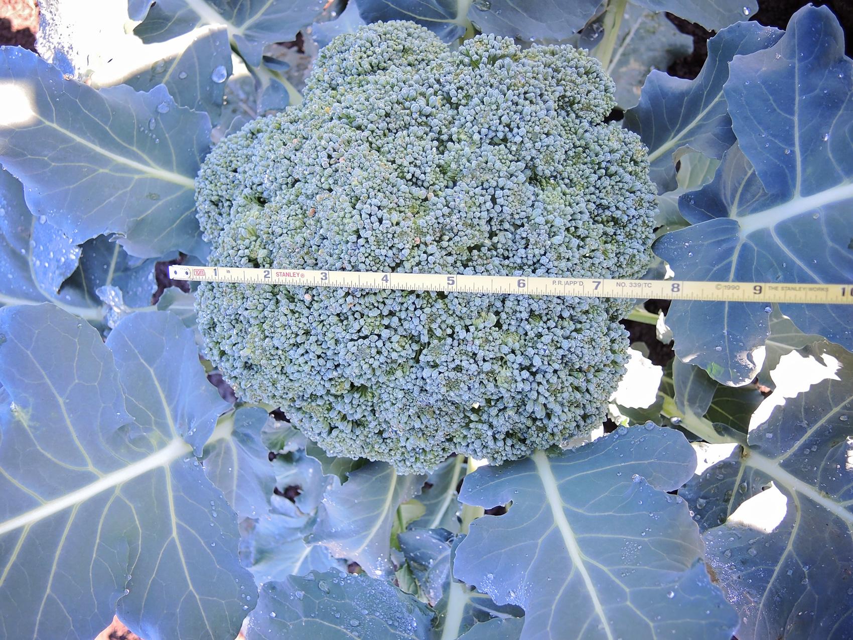 Blue-Wind-BR-10-27-14.jpg