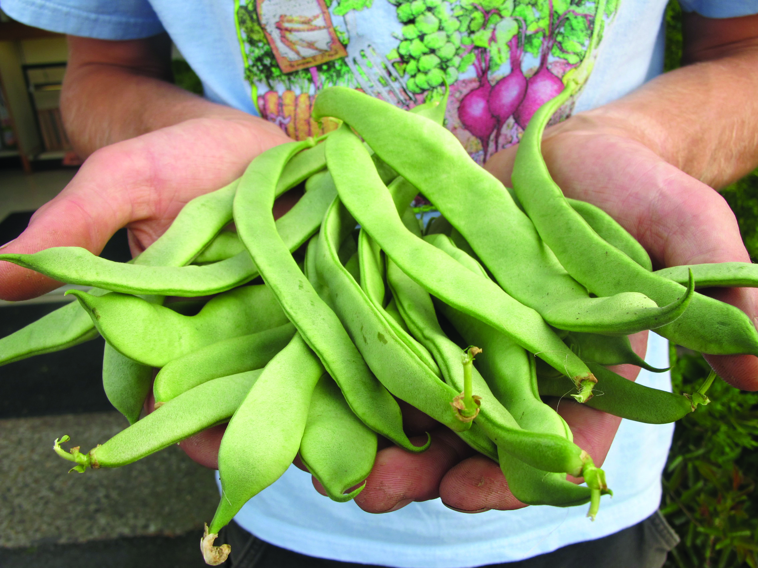 All of our bean varieties are open-pollinated.