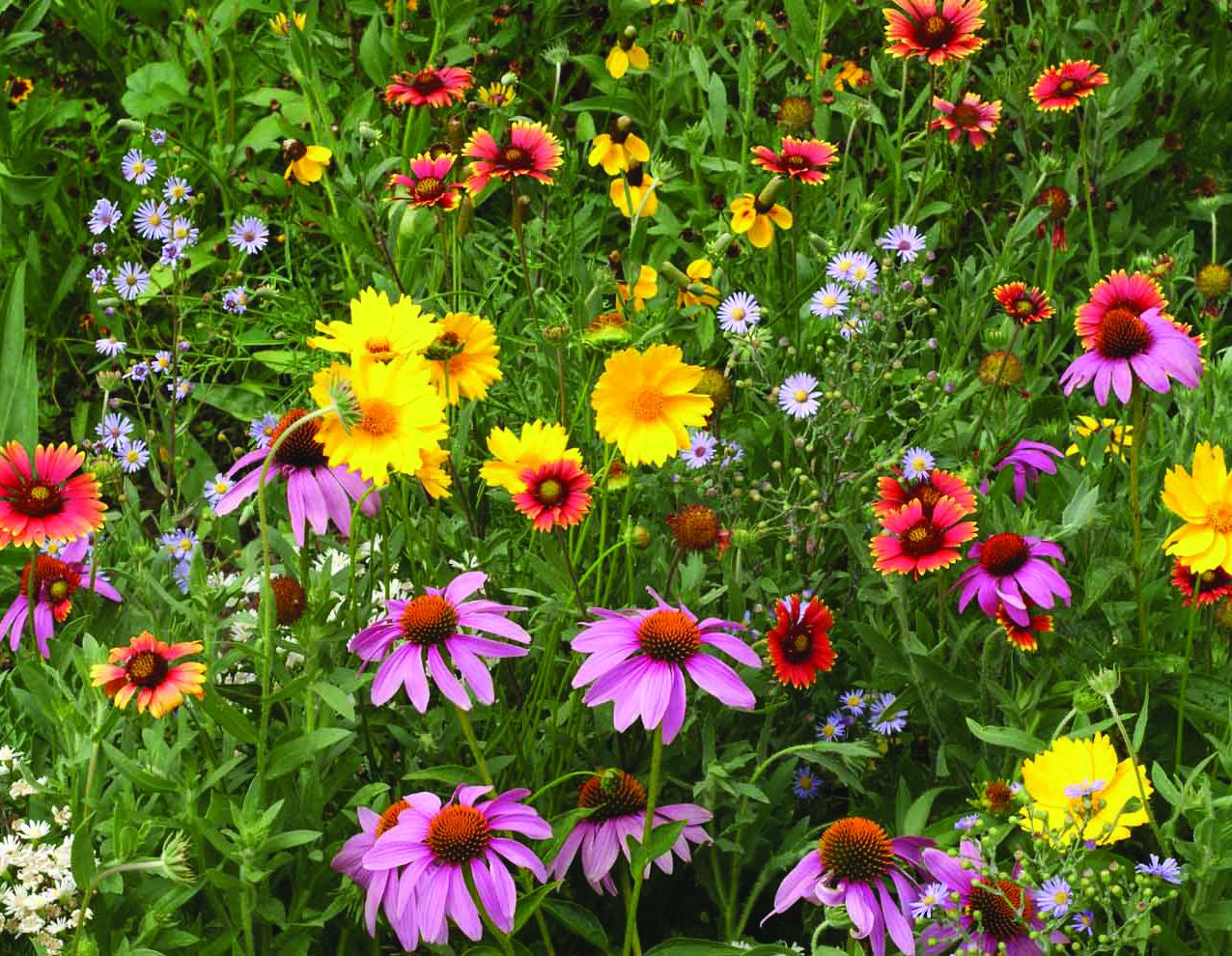 fl2438 bee feed.jpg