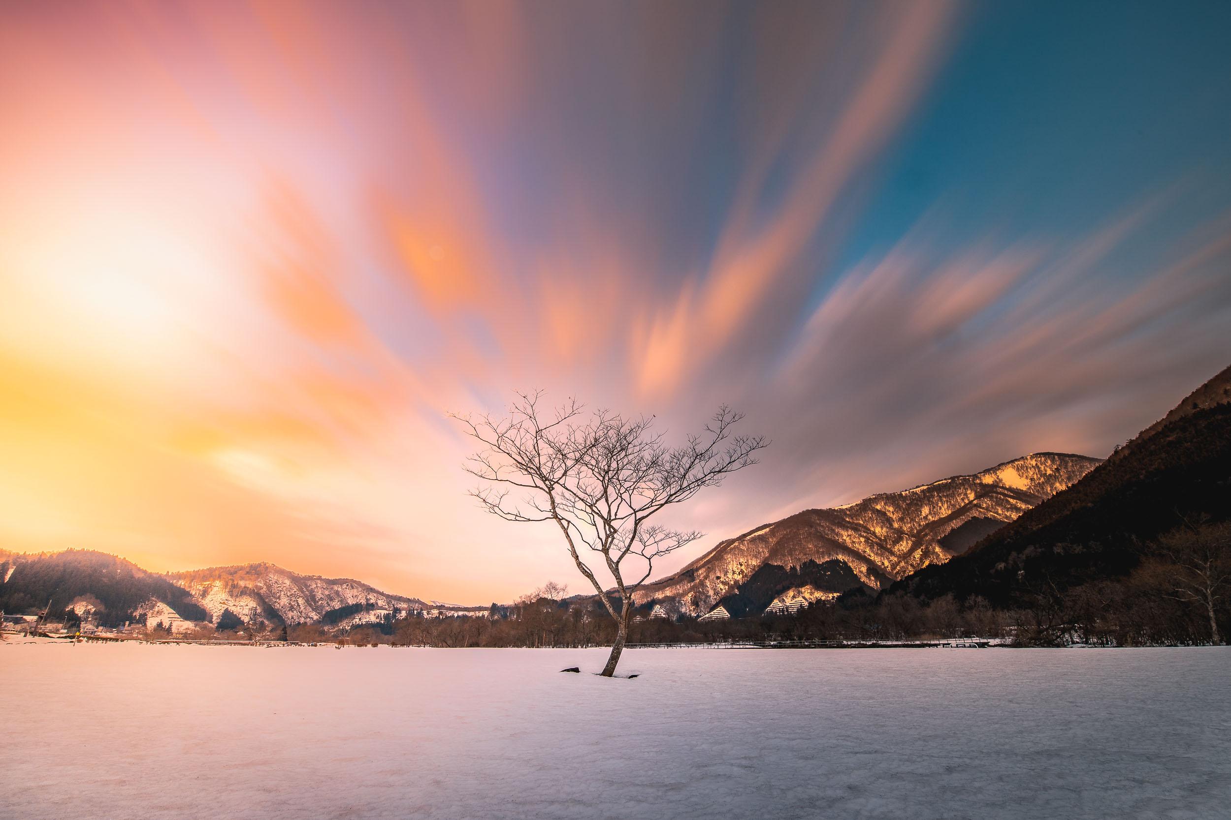 Lone tree during sunrise - Naruko-onsen
