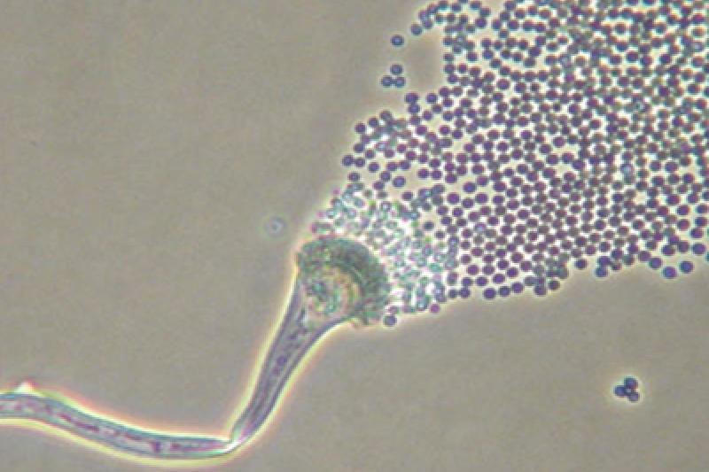 MoldReleasingSpores - Copy.jpg