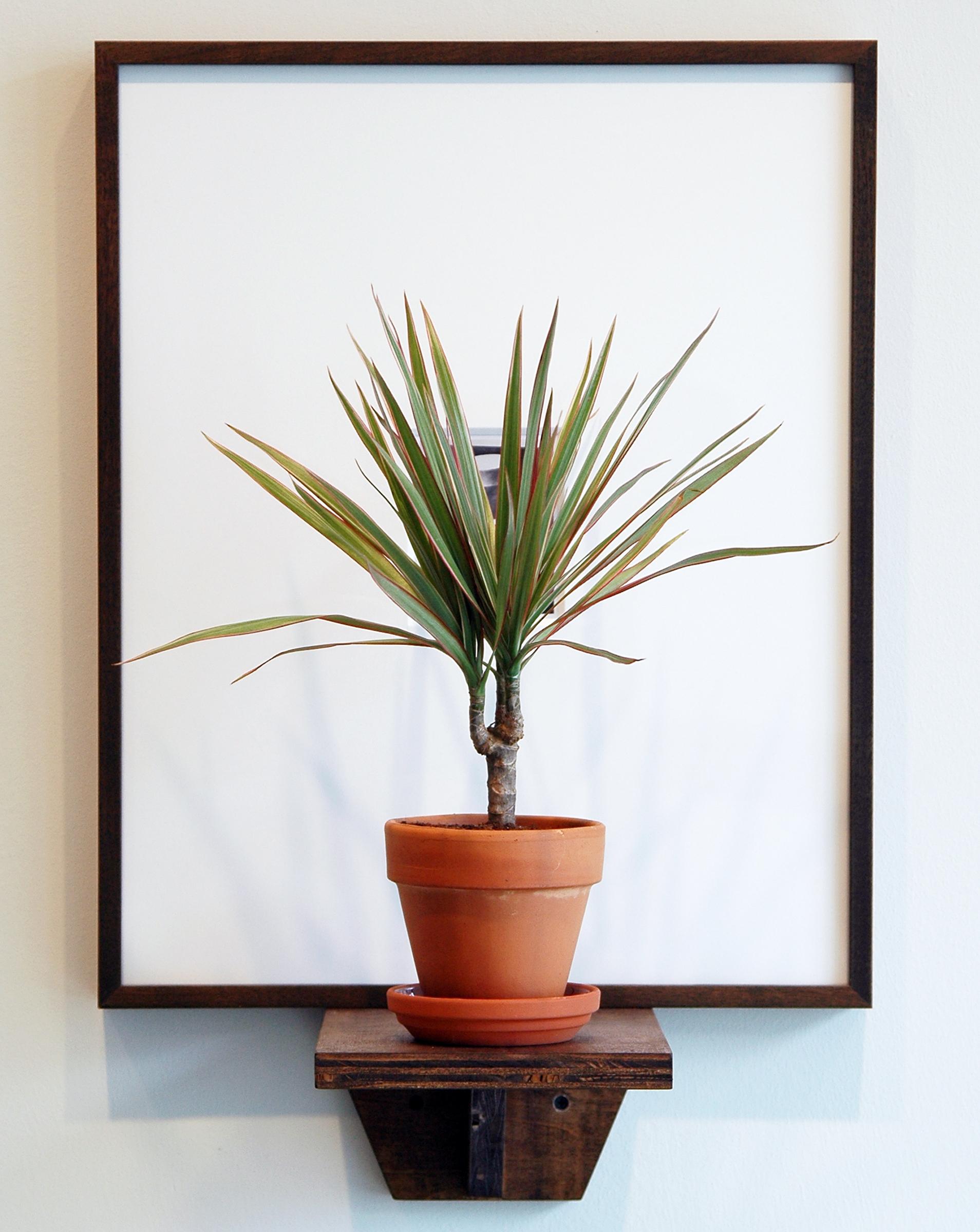 "JOSHUA PIEPER   Dead and Alive (W.C.) , framed archival Polaroid, shelf, tri-colored dresena plant, 24.5"" x 16.25"" x 9.75"", 2012"