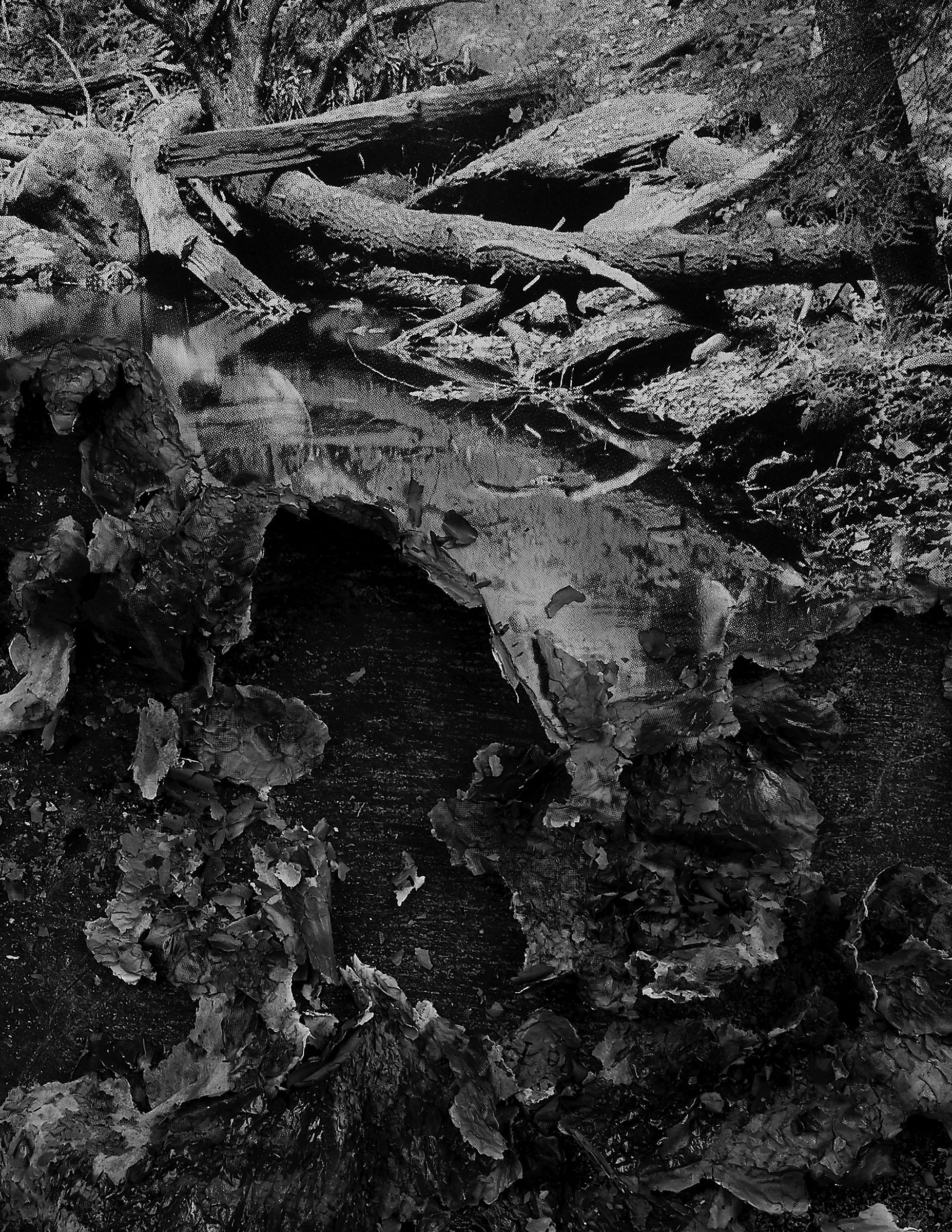 "BESSMA KHALAF (detail)  Burnout (Forest Stream) , 2019 Archival pigment print 33"" x 50"", Edition of 3 with 1AP"