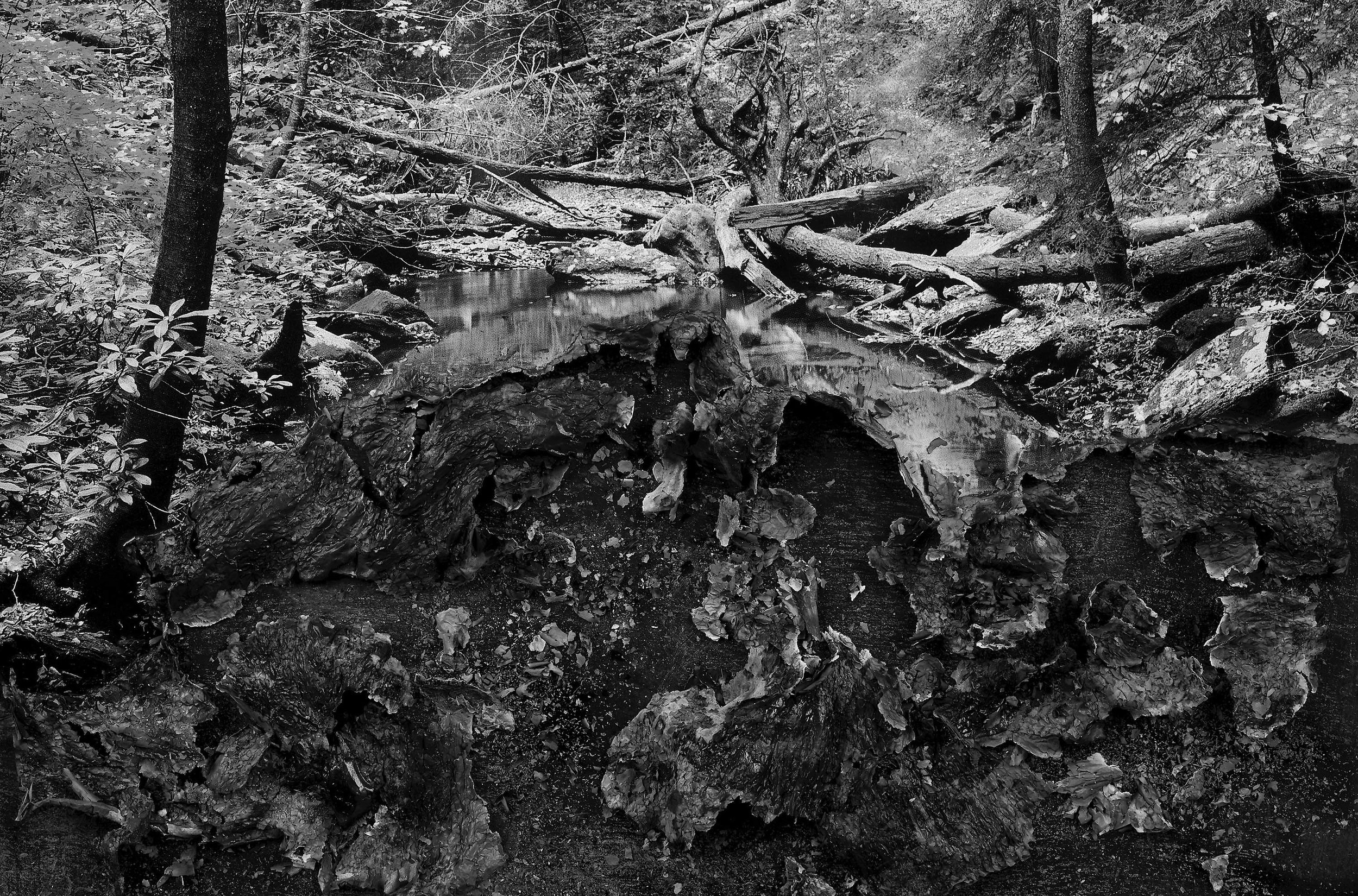 """BESSMA KHALAF  Burnout (Forest Stream) , 2019 Archival pigment print 33"""" x 50"""", Edition of 3 with 1AP"""