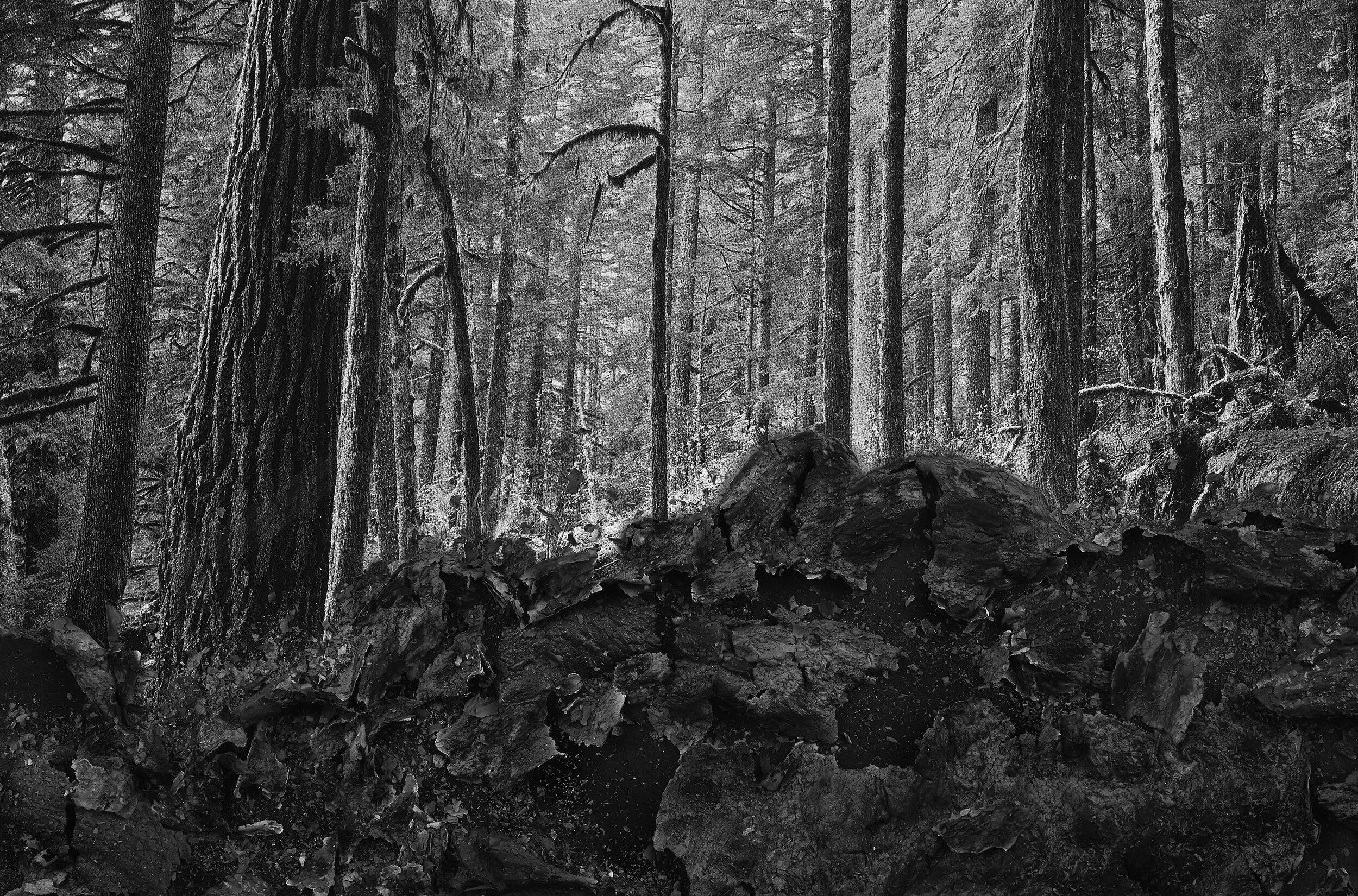 RYG.Khalaf-Forest.jpg