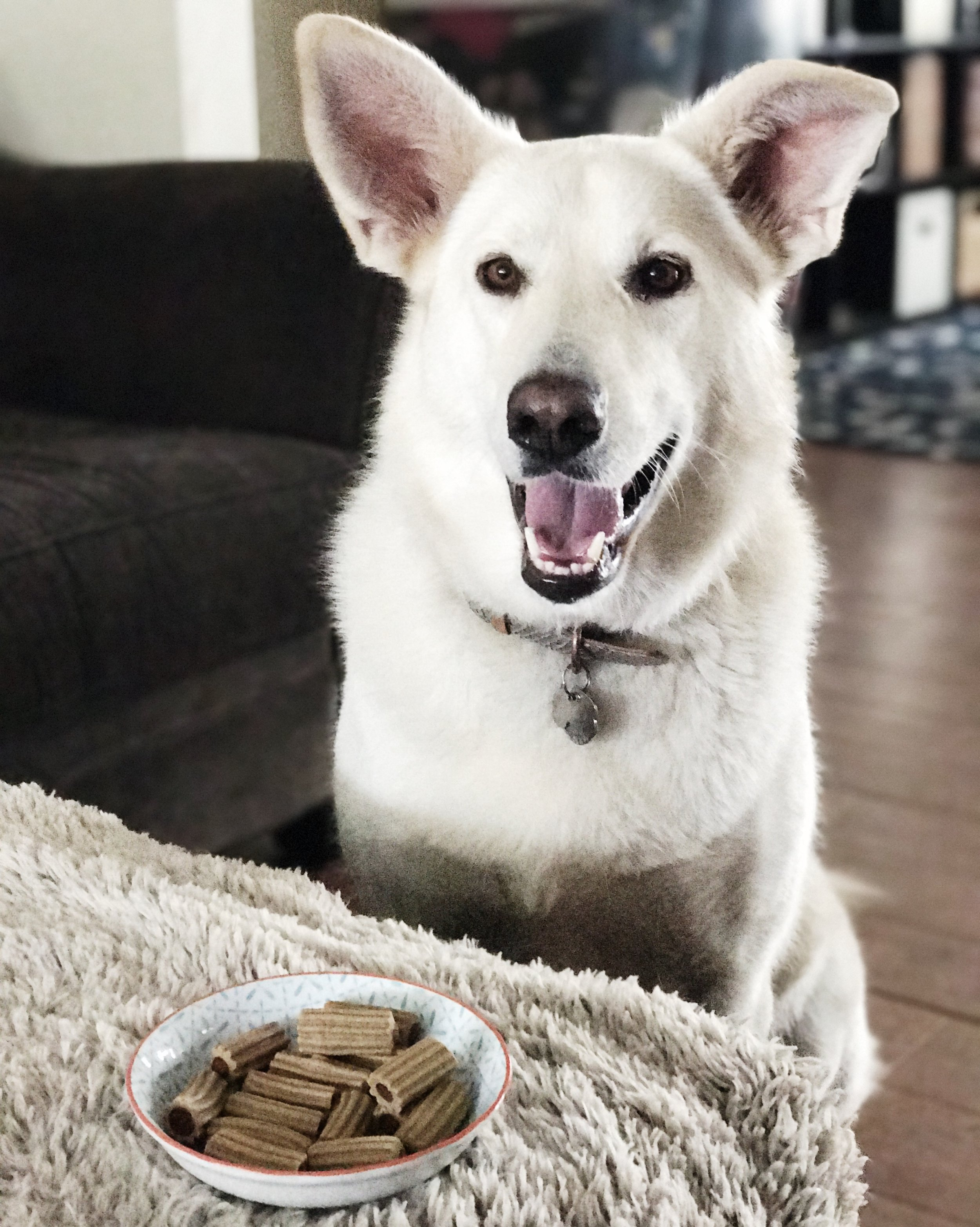 My pup Snow has been enjoying her  Pawsta from Chewy.   Why can't all dog treats be this cute?