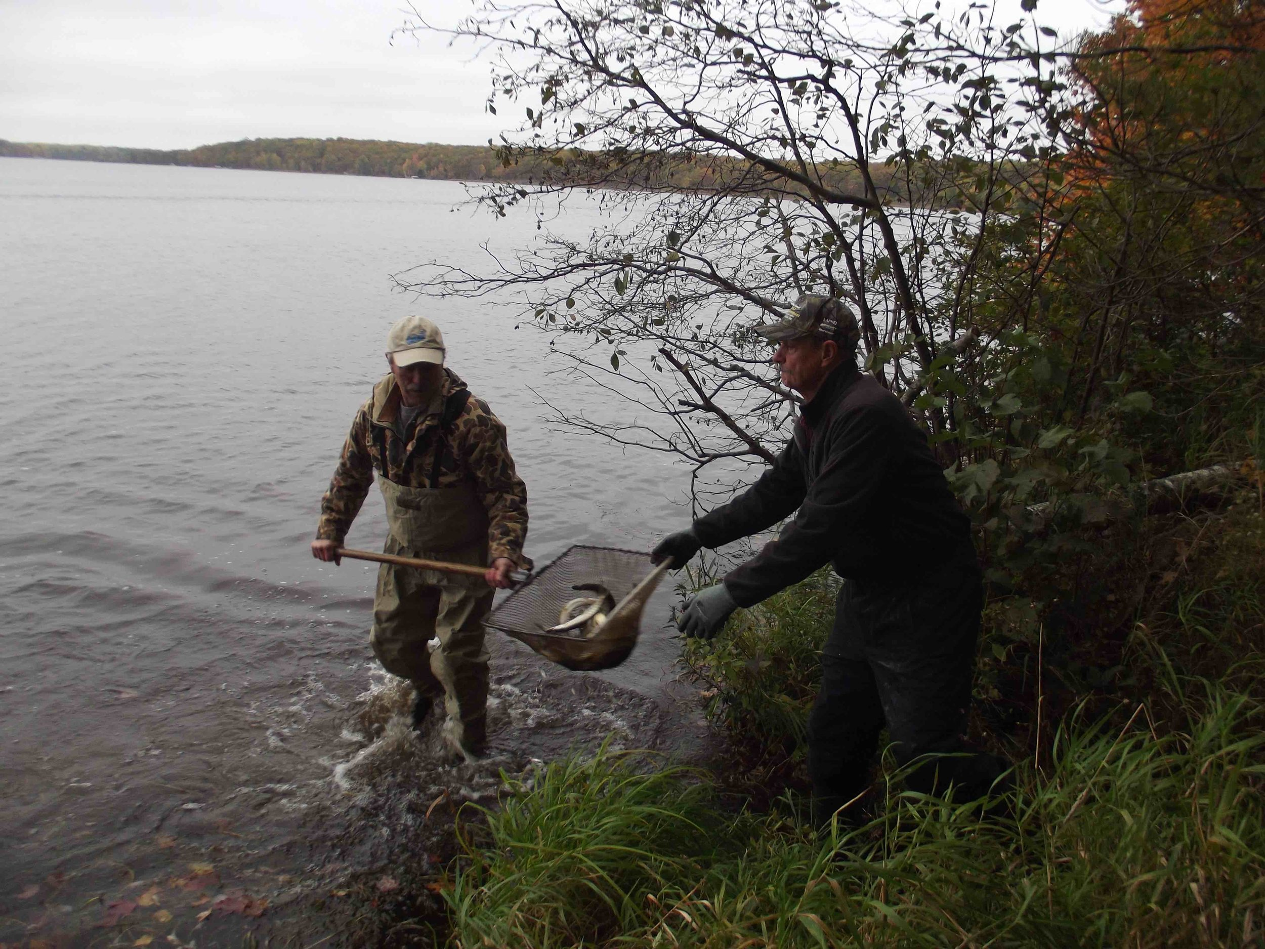 Kevin Horrocks (COLA) and Mike Persson (Muskie's Inc/COLA) stocking musky in Musky Bay of LCO.