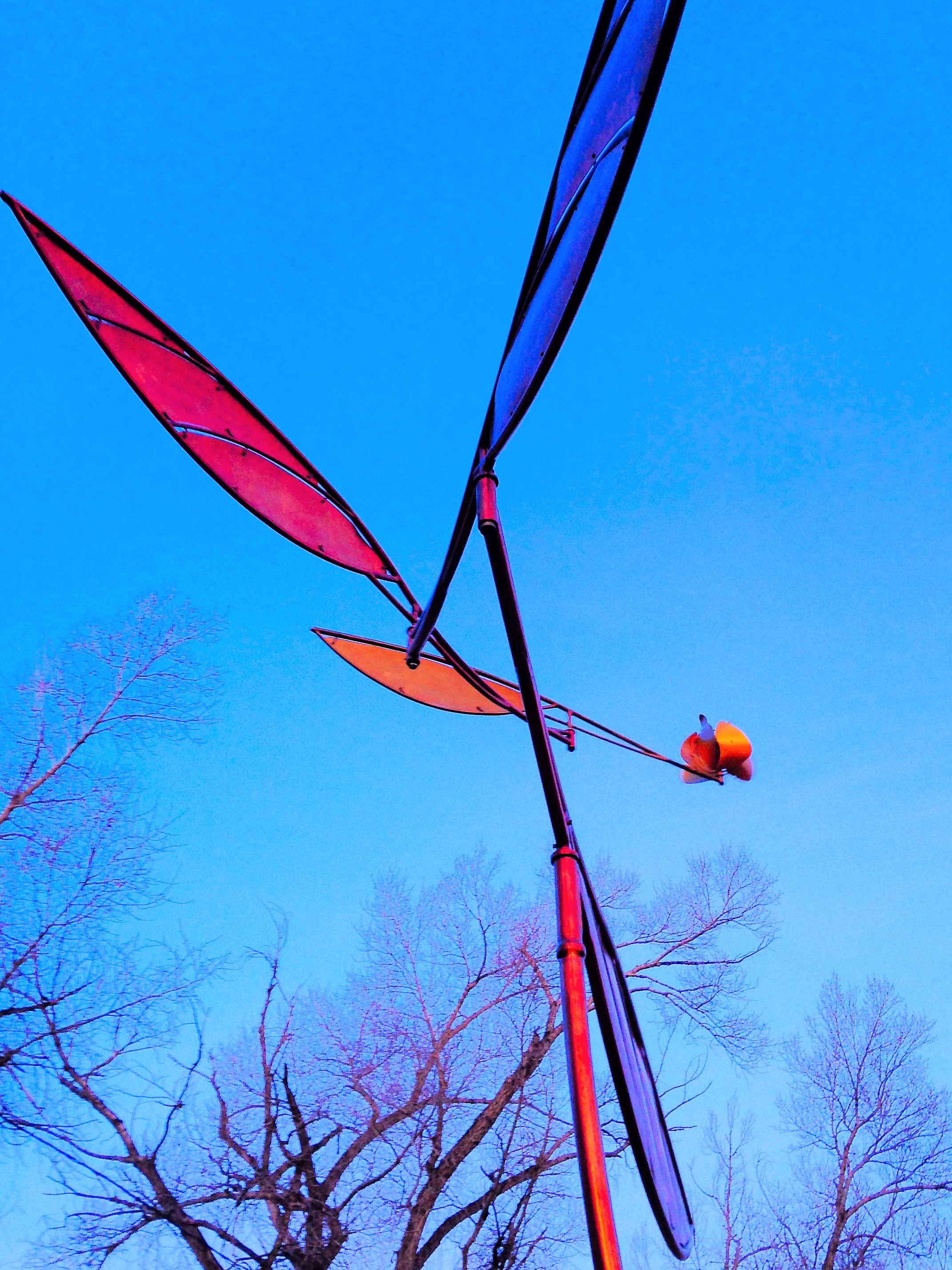 Tangerine Glider- Dawn (2).jpg