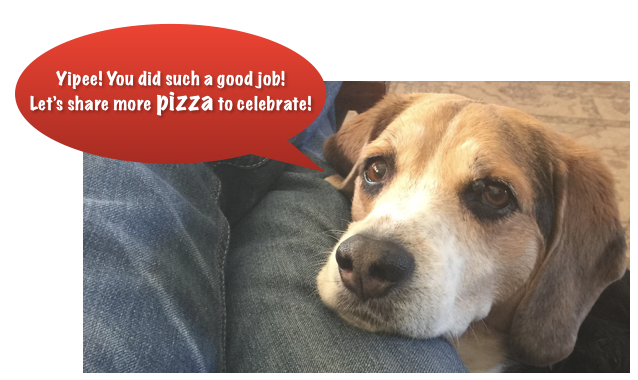 Mookie The Beagle More Pizza