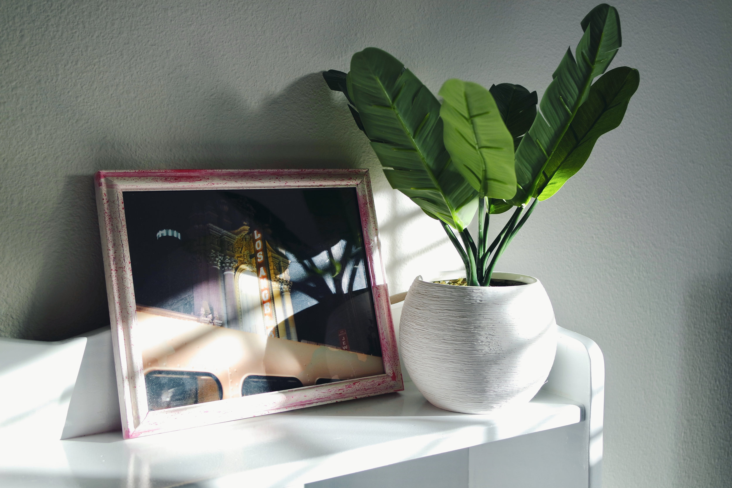 Plant & planter from Target.