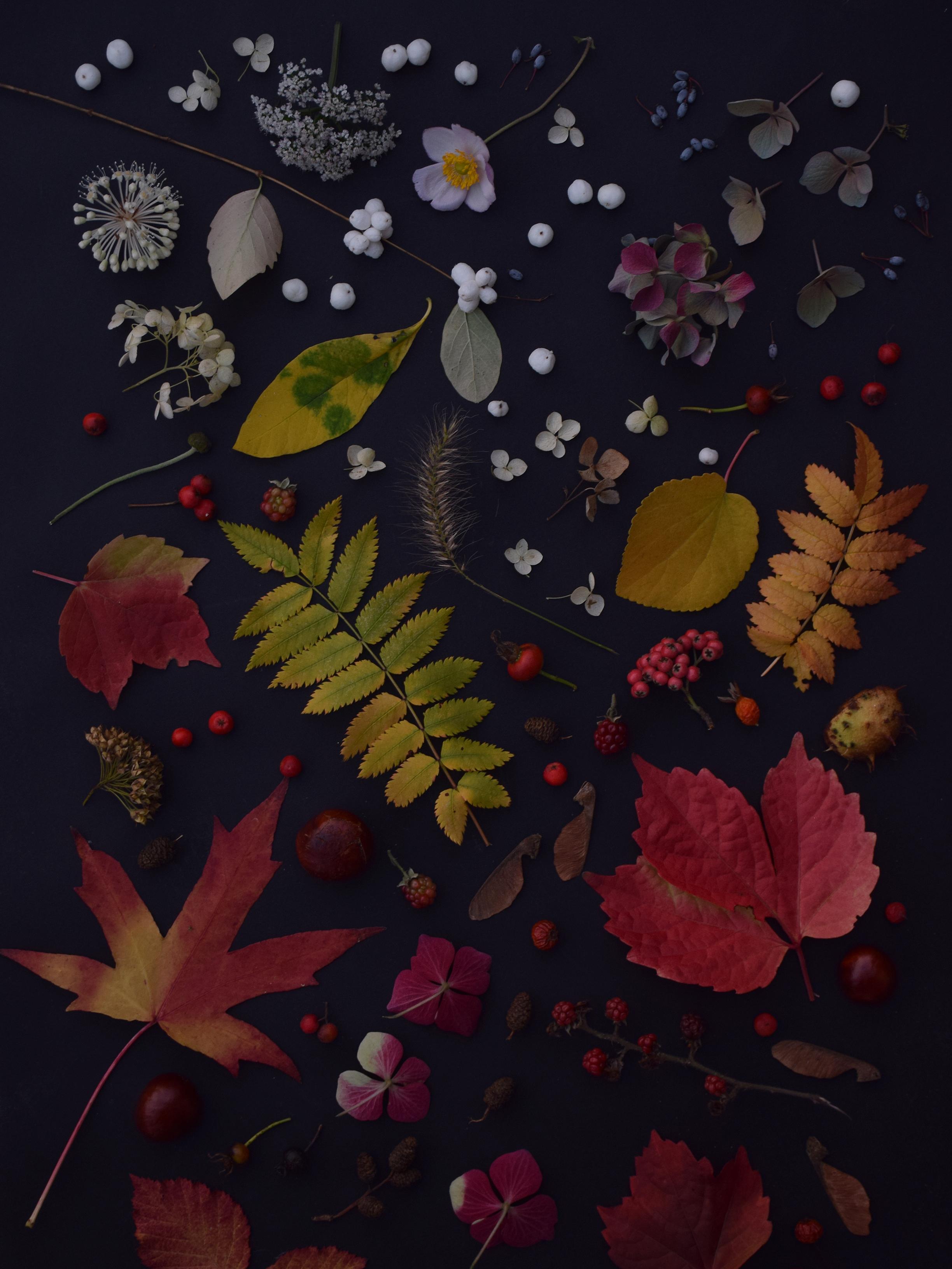 fall9.jpg