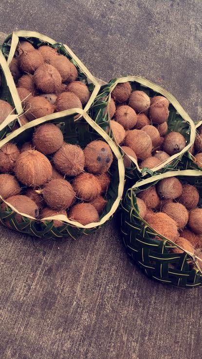 Coconut; Utulei-American Samoa